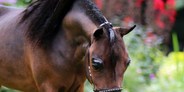 Two new approved stallions for Stal Zegwaard!